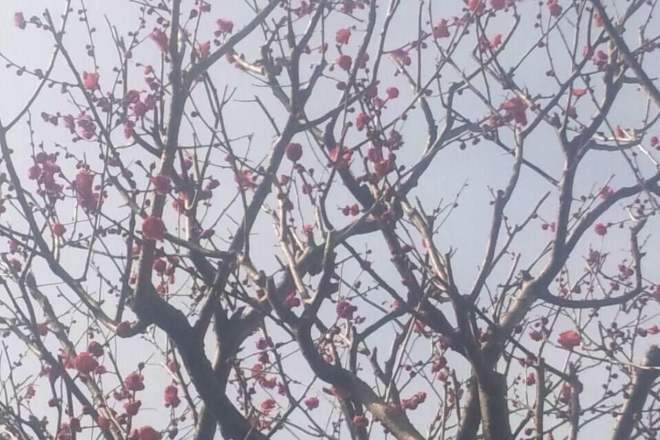 ちりめん山椒鎌倉とも乃から春の装い