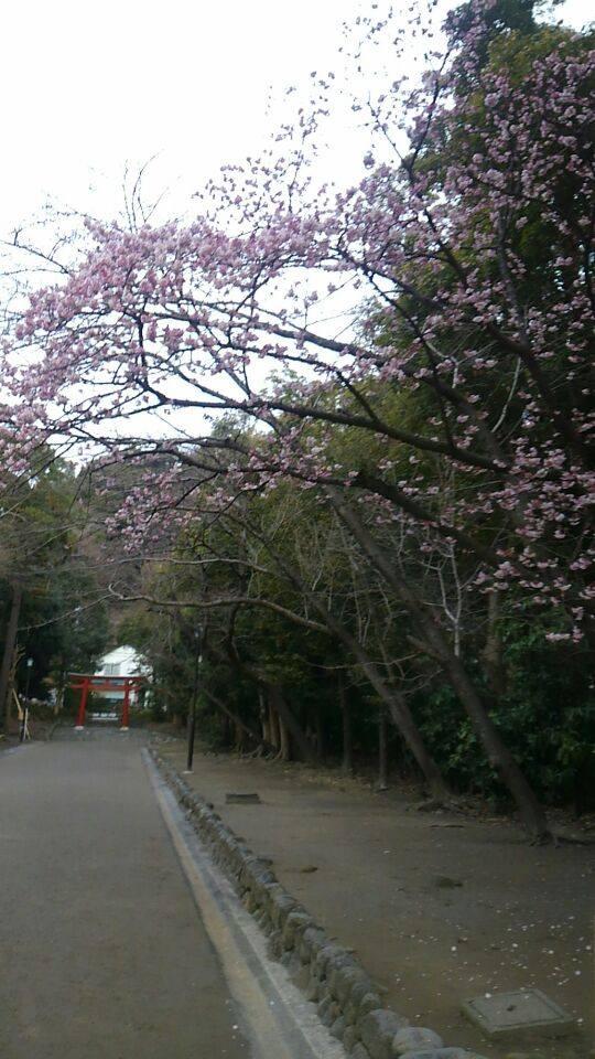 sozai20150301_1